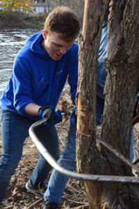 Along the Thornapple River, sophomore Cameron Matyac takes down unwanted trees